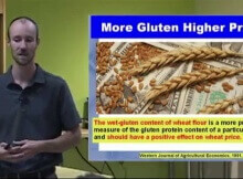Pain from the Grain – Going Gluten Free by Dr. Andrew Rostenberg